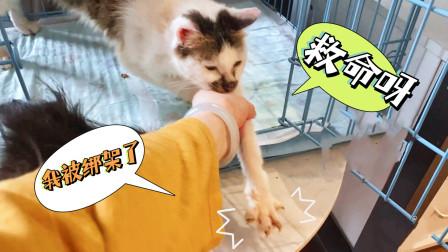 小猫被关笼子20天不堪寂寞强行越狱,机智主人一把拽回:拿来吧你!