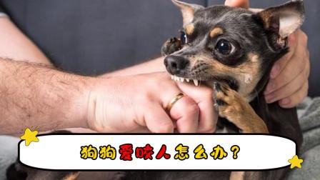 狗狗爱咬人怎么办