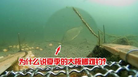 为什么说夏季的大板鲫难钓?结合水下视频告诉你答案