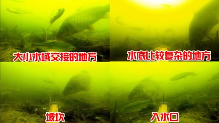夏季野钓鲤鱼,找准这4种钓位,保准你能收获满满!