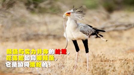 蛇鹫吃毒蛇如同嚼辣条,它是如何猎蛇的?