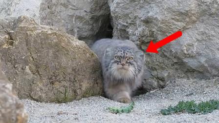 """男子山洞抓到个""""奇怪生物"""",因其长相可爱没吃,却因此逃过一劫!"""