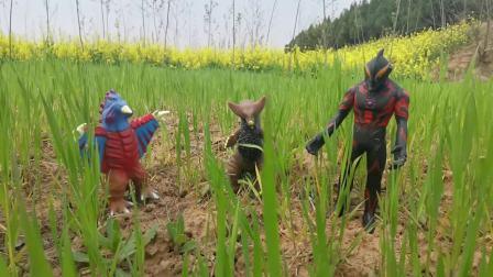 玩具总动员:贝利亚带领怪兽破坏奥特曼的农田