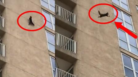 """高楼惊现""""超大蜘蛛"""",当看清后惊呼:这哪是什么蜘蛛啊!"""