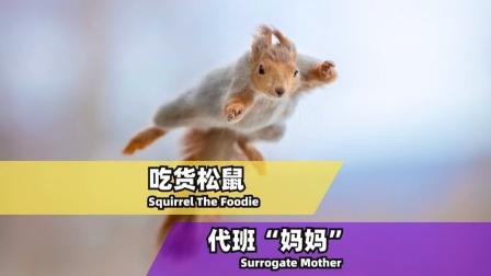 一只爆红国外的松鼠,背后的暖心故事!