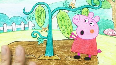 小猪佩奇种苦瓜,结了三个,摘一个给乔治