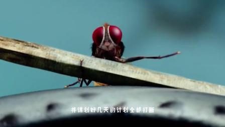 功夫小蝇(中):印度神剧,一只苍蝇的复仇之路!