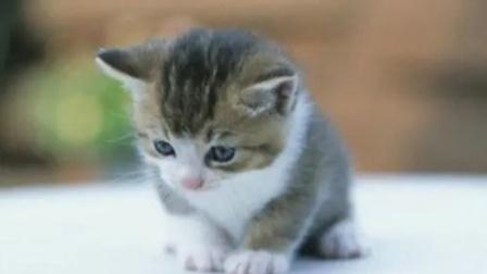 男子当街虐猫被路人制止:你是人,它就不是生命吗