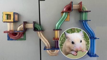 主人用积木管道给小仓鼠自制一个闯关游戏