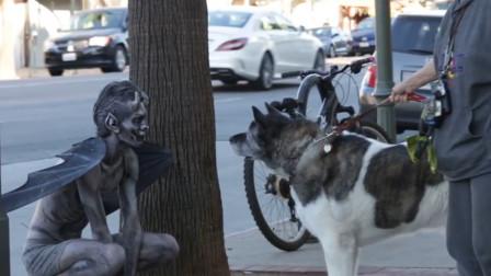 """""""恶魔""""蹲在街头寻找猎物,不料一只憨狗傻傻靠近,下一秒憋住别笑!"""