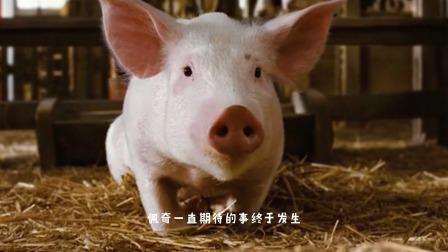 夏洛特的网(下):小猪怕自己被做成熏肉,努力活成了一个明星!