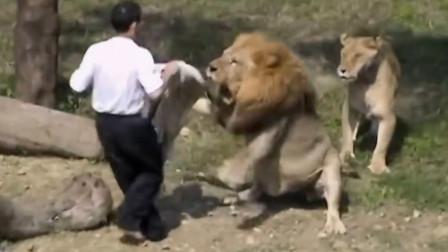 """男子不小心掉入狮子园,接下来的操作,堪称""""教科书级别""""!"""
