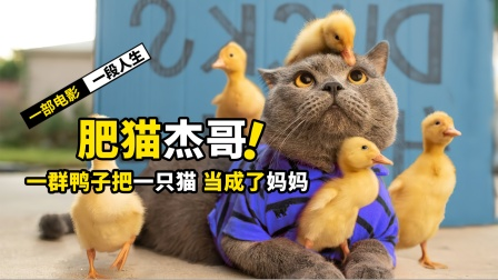 一只猫救了四只小鸭子,却被鸭子当成妈妈