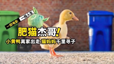 小黄鸭离家出走,猫妈妈千里寻子