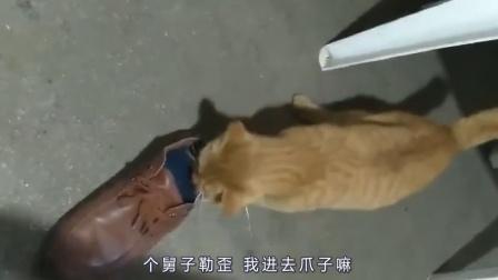 心系铲屎官的猫,老鼠:你今天非要玩死我?