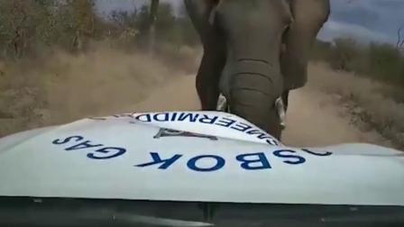 货运司机惨遭野生大象连续攻击,隔着屏幕都害怕