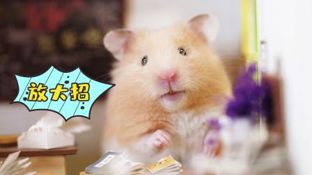 宠物搞笑剧:仓鼠教你如何战胜这个夏天,太逗了!
