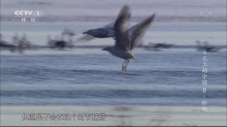 舌尖上的中国:渔民们在湖里放的草把子,就是为了给华子鱼提供更好的温床