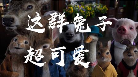 这群小兔子超可爱,超级治愈喜剧、真人版电影《彼得兔2逃跑计划》