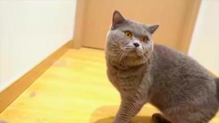 给三只猫咪买了沙雕玩具