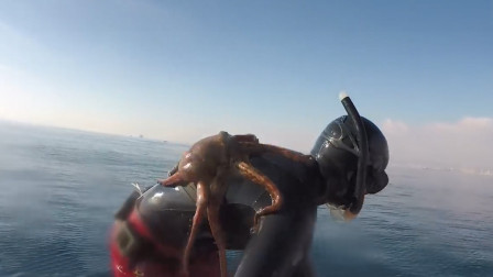 男子在海中潜水,突然发觉后背上一阵骚痒,上船后却乐坏了!