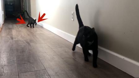 女子收养了一只黑猫,结果越长越不对劲,这是怎么回事?