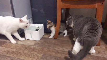 铲屎官新领养了一只小奶猫,谁知家里的猫咪竟然这么对它!