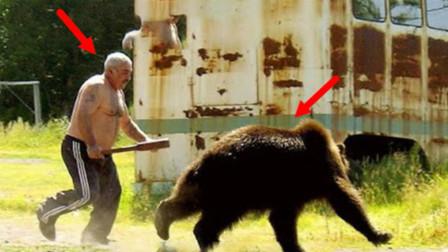 """棕熊""""越狱""""出逃,怎料被猛男一脚""""干翻"""",熊:不讲武德!"""