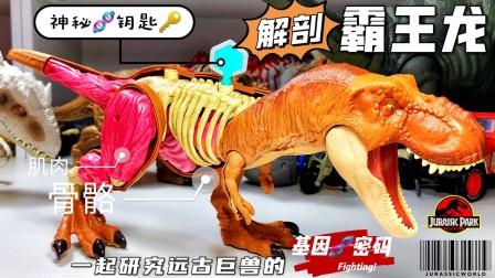 用基因钥匙解剖远古霸王龙!侏罗纪世界恐龙暴虐龙迅猛龙奥特曼!