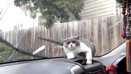 我就开个雨刷器, 你这是什么表情
