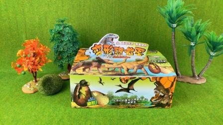 变形恐龙蛋玩具,认识剑龙、霸王龙!
