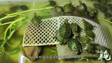 火焰龟苗子刚到家怎么养,小池把青菜叶丢在水里,为什么?