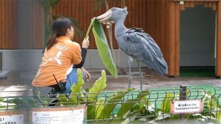 动物的迷惑行为,人终究败给了低智商鲸头鹤