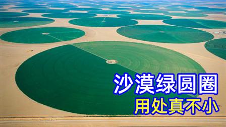 为什么阿拉伯人要花30年在沙漠里造绿色圆圈