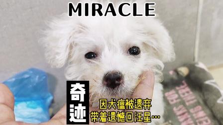 巴掌大的奶狗被扔在路边,大雨将至,它很想活下去。