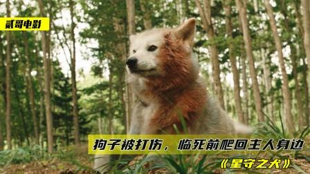 主人去世半年,狗子坚持每天为他寻找食物,最后却被人用木头砸死