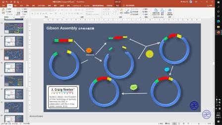 【四方居士】Powerpoint利用基本形状绘制吉布森克隆示意图