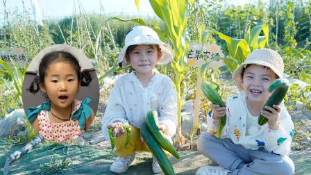 农场vlog:苏菲娅和由旦在芒果农场发现黄瓜可能被小兔子吃了