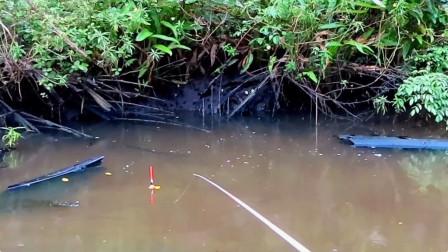 钓鱼:太多黑鱼了,下竿就上钩,连竿不断