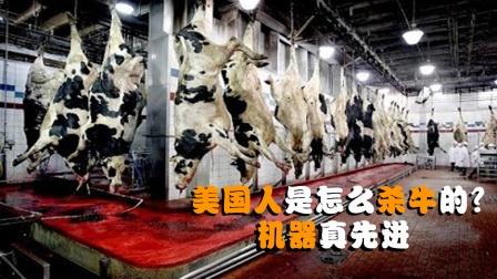 美国人是怎么杀牛的?全自动机械化,放心牛肉就是这么来的