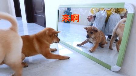 小狗第一次照镜子,看到自己的模样,行为让人感到不可思议