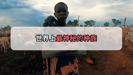 非洲这个种族,世代偏爱牛尿牛粪,这波奇葩操作谁扛得住