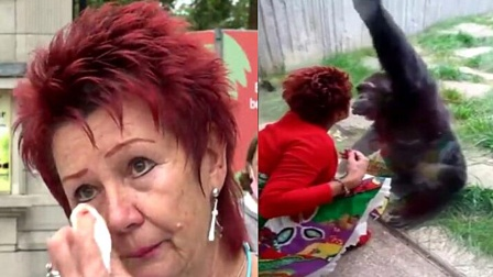 比利时女子与猩猩相爱,频繁送吻影响猩际交往,被禁入动物园