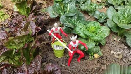 赛文和泰罗在菜地给菜施肥,还拔了根大葱送给雷德王