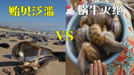 奇葩非洲做奇葩事,挨饿不吃贻贝导致泛滥成灾,蜗牛却被吃到灭绝