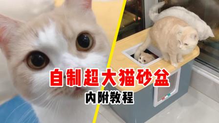 自制超大猫砂盆,可以让三只肥猫一起上厕所