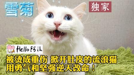 流浪猫被烫开肚皮重伤 弃置路边深夜求救!