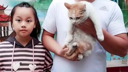 小猫咪饿了,该喂它吃点什么?