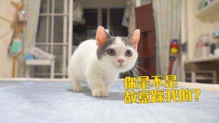 不小心踩到了小奶猫,它居然装腿瘸骗吃骗喝