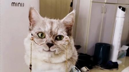 原来小猫咪也有烦恼,戴眼镜又帅了!